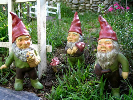 gnomes and toadstools!