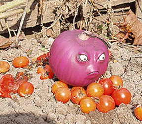 grumpy red onion!